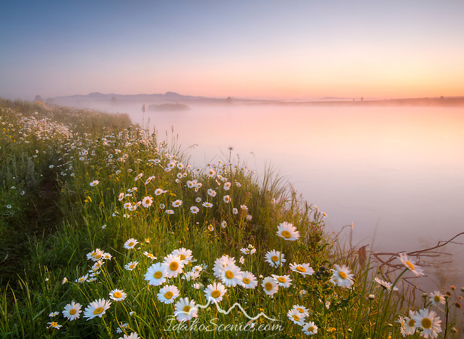 Idaho, Eastern, Island Park, Harriman State Park. Morning mist rising from the daisy lined Henry's Fork in the pre-dawn light.