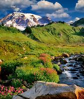 Mt. Rainier/Edith Creek and Monkey Flowers. Washington.