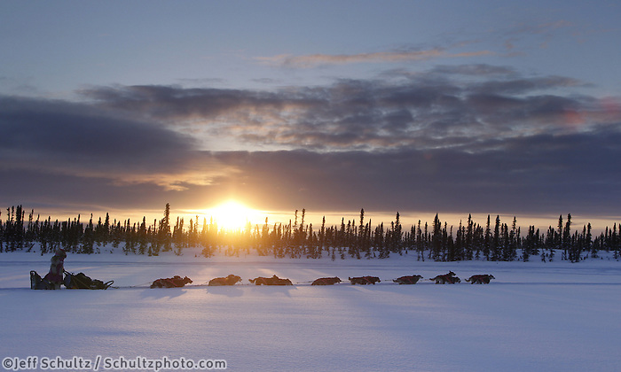 Thursday March, 2012   DeeDee Jonrowe mushes on a swamp as the sun sets near the Cripple checkpoint.   Iditarod 2012.