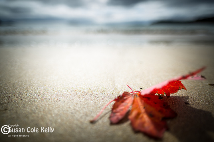 A leaf on the beach in Acadia National Park, Maine, USA