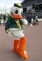 Oct 24, 2009:  The Oregon fighting duck mascot was on the sidelines entertaining Oregon Fans during the game against Washington. Oregon defeated Washington 43-19 at Husky Stadium in Seattle, Washington..