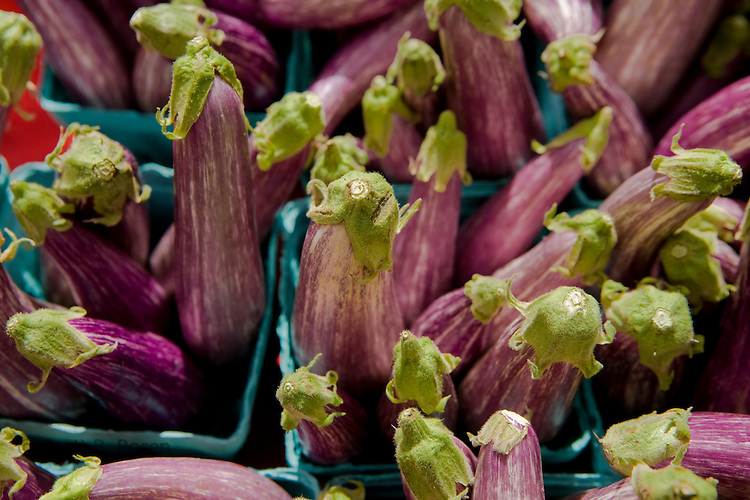 Close-up of fresh Japanese eggplant at the Coventry farmers market, Connecticut