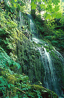 Water Cascade, water falls, Quinault Trail, Olympic National Park, Temperate Rain Forest. Washington USA National Park.