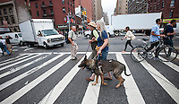 Maria Hansen and her five year old service dog Frisco cross the intersection of Seventh Avenue and West 23rd Street in the Chelsea neighborhood of New York on Wednesday, September 29, 2011 where the NYC Dept. of Transportation has installed new Accessible Pedestrian Signals. The signals advise crossers when the light has changed with an audible voice and sound. The city will be installing the appliances in 25 intersections in the five boroughs this year. (© Richard B. Levine)