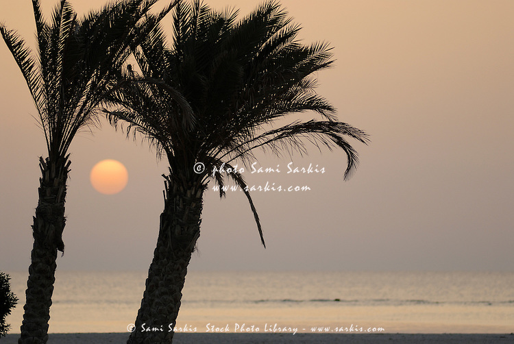 Palm trees and Red sea at sunrise, Red Sea, Egypt