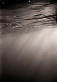 MEXICO, Baja, Magdalena Bay, Pacific Ocean, an underwater shot in Magdalena Bay