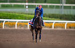 OCT 29: Breeders' Cup Filly & Mare Turf entrant Castle Lady, trained by Henri Alex Pantall, gallops at Santa Anita Park in Arcadia, California on Oct 29, 2019. Evers/Eclipse Sportswire/Breeders' Cup