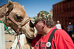 Ross Steffner, of Washoe Valley, Nevada, kisses a camel before the 51st annual International Camel Races in Virginia City, Nevada  September 12, 2010. .CREDIT: Max Whittaker for The Wall Street Journal.CAMEL