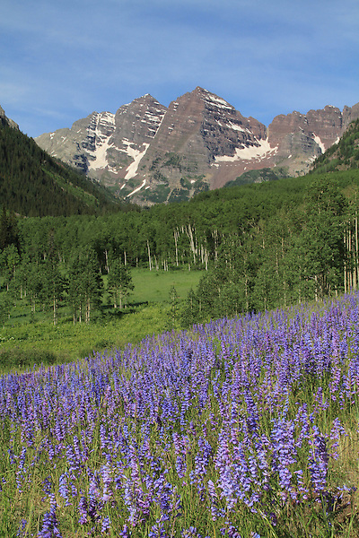 The Maroon Bells Peaks with Lupine wildflowers, Aspen, Colorado John offers fall foliage photo tours throughout Colorado. .  John offers private wildflower tours in the Crested Butte area and throughout Colorado. Year-round.