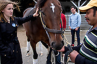 Chris Wong, Assistant Chaplain at the Kentucky Racetrack Chaplaincy, speaks with barn workers while they work on Finnegan's Wake, co-owned by Amanda Gillman (left), before a race at Churchill Downs in Louisville, Ky. on May 1, 2014.