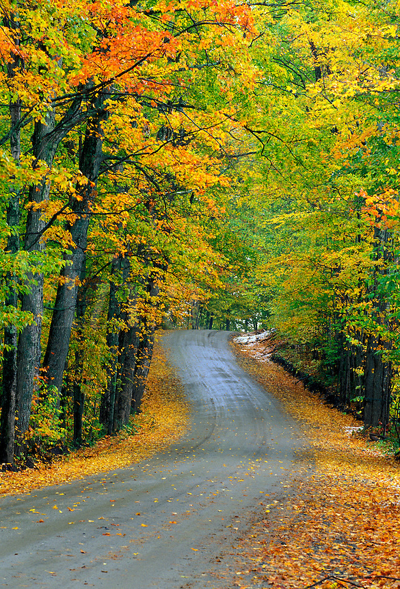 Road through autumn foliage, Craftsbury, Vermon