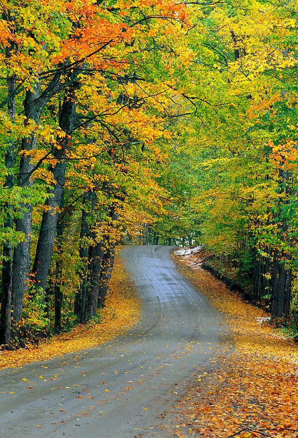 Road through autumn foliage, Craftsbury, Vermon