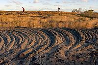 Pu'u Loa Petroglyphs, Chain of Crater Road, Hawaii Volcanoes National Park, Kilauea, Big Island, Hawaii, USA, Pacific Ocean
