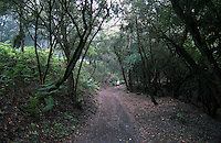 Woman walking along trail through prehistoric forest in the Parque nacional de Garajonay, Unesco world heritage site. La Gomera, Canary Islands.