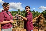 SPAIN Mallorca, Binissalem, Finca Biniagual, wine grape harvest / SPANIEN Mallorca, , Binissalem, Finca Biniagual, Weinernte, Charlotte Miller und Cristina Basanez