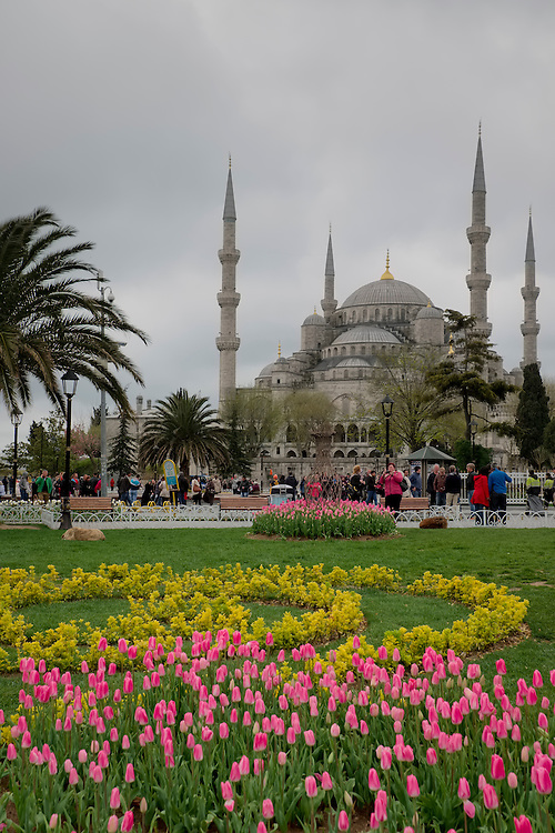 The iconic blue mosque forms the backdrop for this springtime scene in Istanbul.