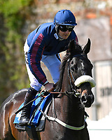 """It'safreebee ridden by Tom Queally goes down to the start of The Willton Homes """"Confined"""" Novice Stakes (Colts & Geldings)  during Afternoon Racing at Salisbury Racecourse on 17th May 2018"""
