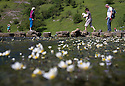 10/07/15<br /> <br /> Water Crowfoot (Ranunculus aquatilis) flowers blooming on the river Dove at the Stepping Stones, Dovedale, near Ashbourne, Derbyshire.<br /> <br /> Other common names for this short-lived summer flower include: common water crowfoot , lodewort, ram's foot , ram's wort, water anemone , water buttercup , and<br /> water snowcups<br /> <br /> Ranunculus aquatilis is a short-lived aquatic perennial with submerged leaves divided into thread-like segments, and palmately lobed floating leaves, and solitary white flowers 2cm across in summer.<br /> <br /> <br /> <br /> <br /> All Rights Reserved: F Stop Press Ltd. +44(0)1335 418629   www.fstoppress.com.