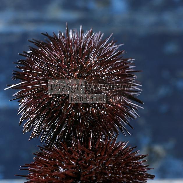 Europe/France/Bretagne/22/Cotes d'Armor/Côtes d'Armor/Erquy: Oursins - Stylisme : Valérie LHOMME //  //   France, Cotes d'Armor, Erquy, Sea urchin