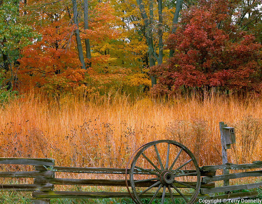 Bureau County, IL<br /> Split rail fence and tall grass praire at the edge of an oak, maple hardwood forest in fall color