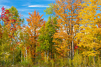 A mix of fall colors in northern Wisconsin.