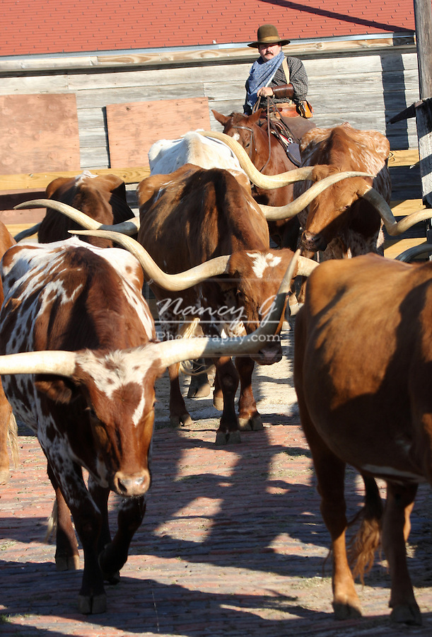 A Texas Longhorn Cattle Drive Through The Stockyards In Fort Worth Texas National Historic District Exchange Ave Stockyards Station Nancy Greifenhagen