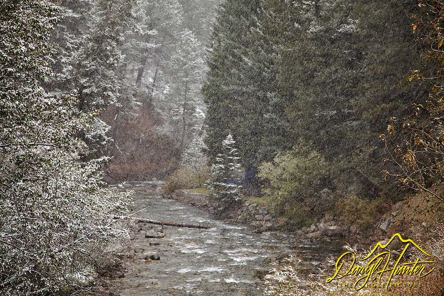 Mill Creek, snowstorm, Paradise Valley Montana