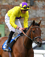 Sea of Faith ridden by James Doyle goes down to the start  of The British EBF Premier Fillies' Handicap during Horse Racing at Salisbury Racecourse on 15th August 2019