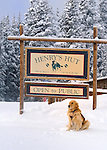 Vail Mountain's avalanche rescue dog, Henry, a Labroador,rests in front of Henry's Hut on the 11,000 foot summit of Vail mountain.