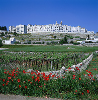 Italy, Puglia, Locorotondo: town at Valle d'Itria (Trulli-region) with church Chiesa Madre | Italien, Apulien, Locorotondo: Ort im Valle d'Itria (Trulli-Region) mit der Chiesa Madre