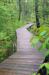 Boardwalk through woods at the Saco Heath Preserve, Saco, Maine, USA