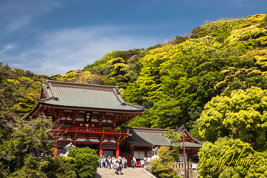 Tsurugaoka Hachimangū (鶴岡八幡宮?) is the most important Shinto shrine in the city of Kamakura, Kanagawa Prefecture, Japan. The shrine is at the geographical and cultural center of the city of Kamakura, which has largely grown around it and its 1.8 km approach. It is the venue of many of its most important festivals, and hosts two museums.<br />