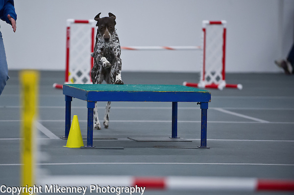 Central New York SHetland Sheepdog Club Winter Agility Trial January 16 - 17 2015