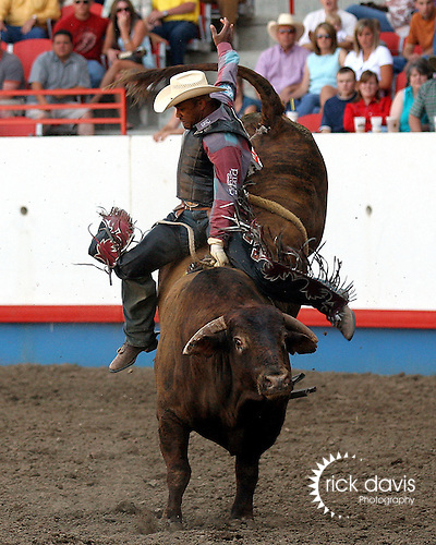 PRCA bullrider Mike Moore scores an 83 point ride on Beutler & Son Rodeo Company bull Deputy Sheriff to tie in the round with Souli Shanklin on July 29, 2008 at the Greeley Independence Stampede Rodeo in Greeley, Colorado.