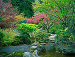 Jackson County, OR       <br /> Spring blossoming shrubs and trees in the Japanese Garden of Lithia park in Ashland