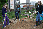 Members of Girl Scout Troop 1806, from left, Emma Carter, Kathleen Stancil-Sutton and Willa Holt work to break up the soil for planting a new bed at SEEDS Community Garden, Durham, NC, Saturday, March 26, 2011.