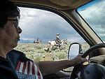 Cynthia Baldauf drives the support truck during the driving the longhorn cattle to summer range in the Big Hole Valley, Montana, along SR 43 with Andy Baldauf, Dan Coon & Sandee Nelson pushing them north from Wisdom.