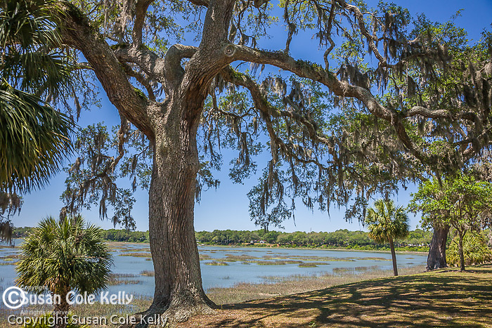 Live oaks draped with Spanish moss line the bay in Beaufort, SC.