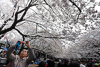 Taking photos of the cherry blossom, Ueno Park, Tokyo, Japan, April 3, 2010.