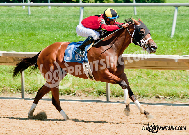 Virginia Ann winning at Delaware Park on 7/29/13