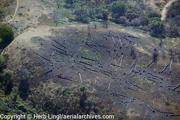 aerial view of clearcutting, eucalyptus, Angel Island, San Francisco bay