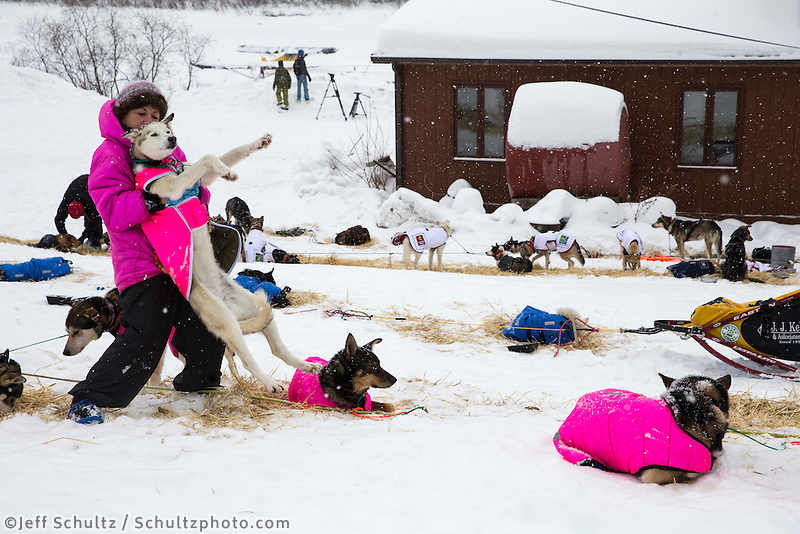 DeeDee Jonrowe gives one of her dogs a back stretch at the Takotna checkpoint on Wednesday March 6, 2013...Iditarod Sled Dog Race 2013..Photo by Jeff Schultz copyright 2013 DO NOT REPRODUCE WITHOUT PERMISSION