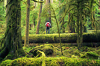 Hiker on log. Opal Creek Wilderness, Oregon