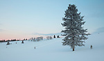 Idaho, south central, Custer County, Stanley. Pink skies at dawn and a snowy hillside where the snowmobilers have left tracks in the Sawtooth Valley.