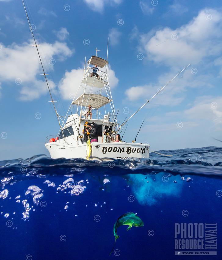Tourists catching a mahimahi from fishing charter boat Boom Boom between Moloka'i and O'ahu.