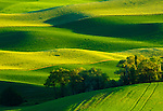 Green fields of the Palouse valley in Washington
