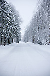 Washington, Loon Lake. A tree lined country road on a snow winter day.