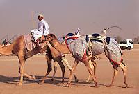 Vereinigte arabische Emirate (VAE, UAE),  bei Duba, Rennkamele beim Training, Die jockeys sind kleine Roboter.