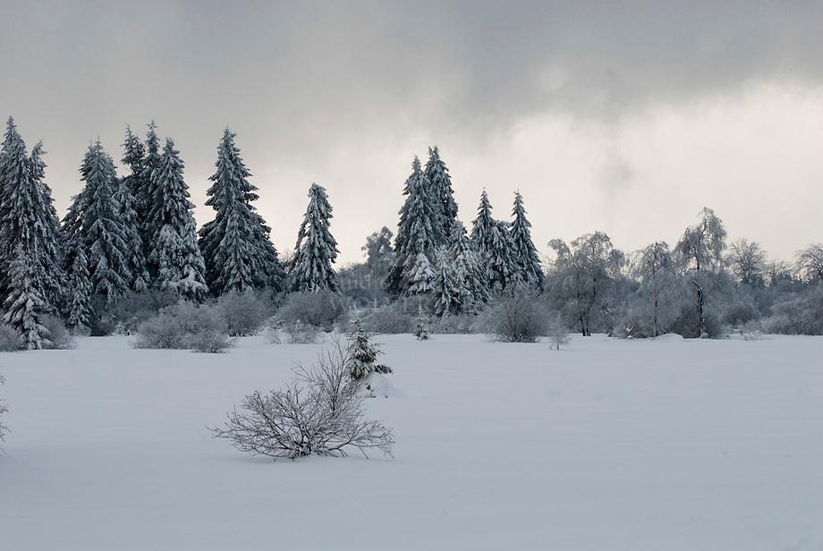 Hoge venen in de winter