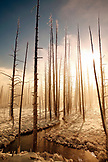 USA, Wyoming, Yellowstone National Park, Tangle Creek runs through Bobby Sock Trees, Lower Geyser Basin